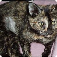 Adopt A Pet :: Monkey - Westfield, MA
