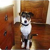 Adopt A Pet :: Tobin - Irvine, CA