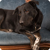 Adopt A Pet :: Brice - Eugene, OR