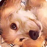 Adopt A Pet :: Lucky - Santa Ana, CA