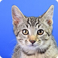Adopt A Pet :: Bowie - Carencro, LA