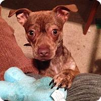 Adopt A Pet :: Woodie - Santa Maria, CA