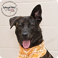 Adopt A Pet :: Mojo - Troy, OH