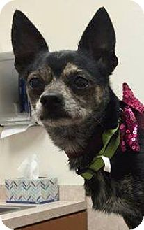 Chihuahua Mix Dog for adoption in Henderson, Nevada - DJay