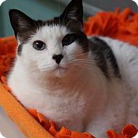 Adopt A Pet :: Squeakers - Sarasota, FL