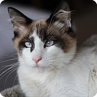 Adopt A Pet :: Jackson (applications pending) - Richmond, VA