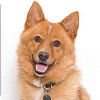 Adopt A Pet :: Zeek - San Luis Obispo, CA