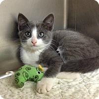 Adopt A Pet :: H-3 female - Triadelphia, WV