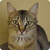 Adopt A Pet :: Sophie - Larned, KS