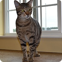 Adopt A Pet :: Pistol - Larned, KS