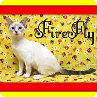 Adopt A Pet :: FireFly - Tracy, CA