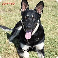 Adopt A Pet :: Otto - Patterson, CA