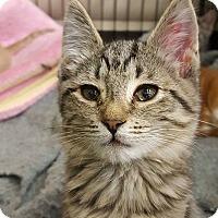 Adopt A Pet :: Puddles - Bensalem, PA