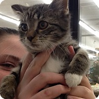 Adopt A Pet :: Jackie - Warren, OH