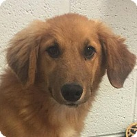 Adopt A Pet :: Muffy - Spring Valley, NY