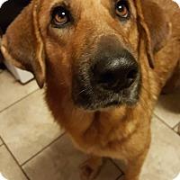 Adopt A Pet :: Ruby - Plainfield, IL