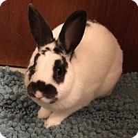 Adopt A Pet :: Tchai - Williston, FL