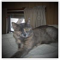 Adopt A Pet :: ELOISE - Medford, WI