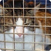 Adopt A Pet :: Lily - Wildomar, CA