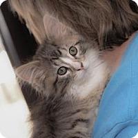 Adopt A Pet :: Tiny - Wichita, KS