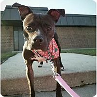 Adopt A Pet :: Trish - Chicago Heights, IL