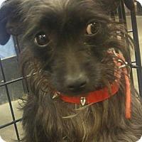 Adopt A Pet :: Jacey - Phoenix, AZ