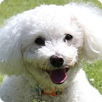 Adopt A Pet :: Gracie - La Costa, CA