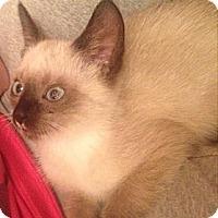 Adopt A Pet :: Rob - East Hanover, NJ