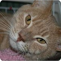 Adopt A Pet :: Dagwood - Frederick, MD