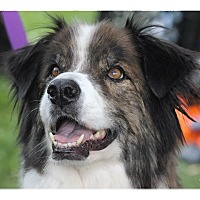 Adopt A Pet :: Chaz - Tempe, AZ