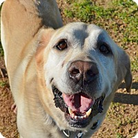 Adopt A Pet :: Earbie - Temple, GA