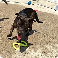 Adopt A Pet :: Marisa Tomei - Jersey City, NJ