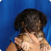 Adopt A Pet :: Jelly - Oviedo, FL