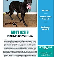 Labrador Retriever/Shepherd (Unknown Type) Mix Dog for adoption in Joliet, Illinois - Ozzie
