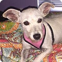 Adopt A Pet :: Jury - Fort Lauderdale, FL