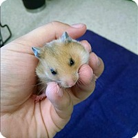 Adopt A Pet :: Cupid - Madison, NJ