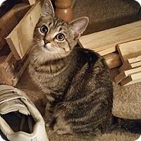 Adopt A Pet :: Lady - Kennesaw, GA