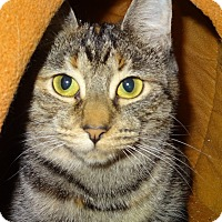 Adopt A Pet :: Tango - Lapeer, MI