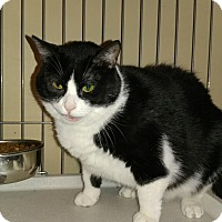 Adopt A Pet :: WILLOW - Bolingbrook, IL