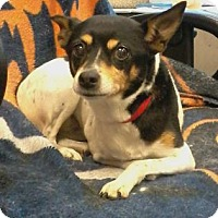 Adopt A Pet :: Misty - Union Grove, WI