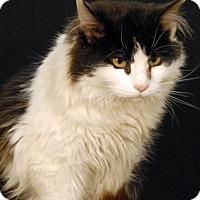 Adopt A Pet :: Wiley - Newland, NC