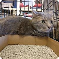 Adopt A Pet :: Stuart - Avon, OH