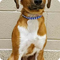 Dog Adoption Shorewood Il