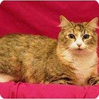 Adopt A Pet :: Nusha - Sacramento, CA