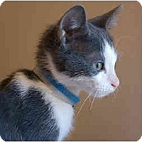 Adopt A Pet :: Thai - Alexandria, VA