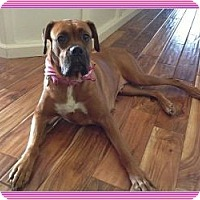 Adopt A Pet :: Rosie Fern (Reduced) - Staunton, VA