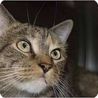 Adopt A Pet :: Sarabi - New Port Richey, FL