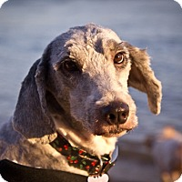 Adopt A Pet :: Sabine - Orange, CA