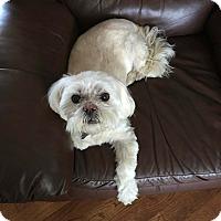 Adopt A Pet :: Sunny - Caledon, ON