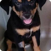 Adopt A Pet :: Blackberry - Gainesville, FL